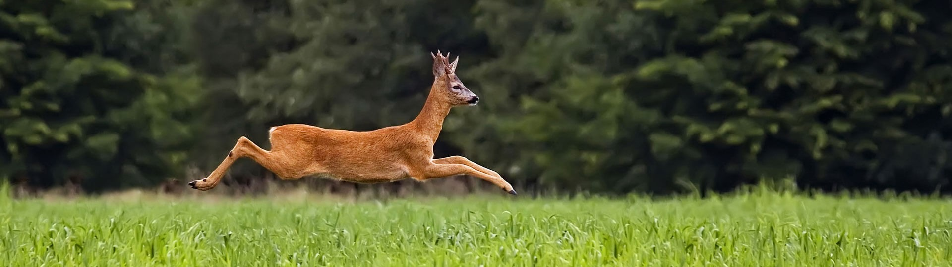 Die Wildzeit ist da, bestellen Sie jetzt unsere Wildfleisch Artikel